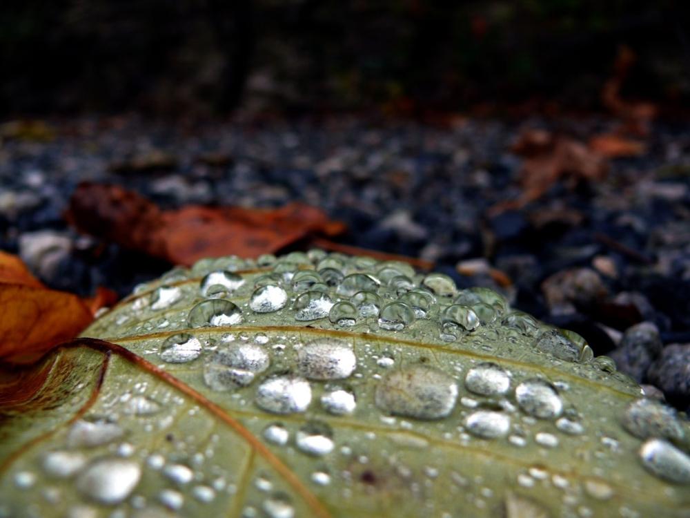100 de gînduri și-o seamă de ploi (4/4)